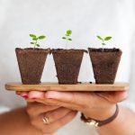 grow a company